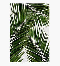 Palm Leaf Green II Photographic Print