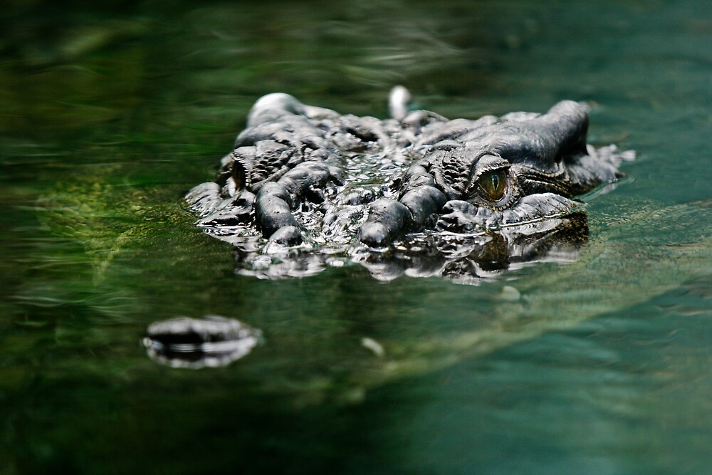 What lies beneath by Stanislaw