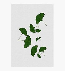 Ginkgo Leaf I Photographic Print