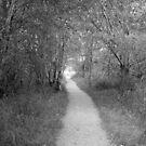 The Secret Path by Rebecca Brann