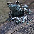 Blue Tree Frog by JBlaminsky