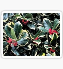 Holly Berries and Leaves Sticker