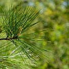 Pine by disizitstudios