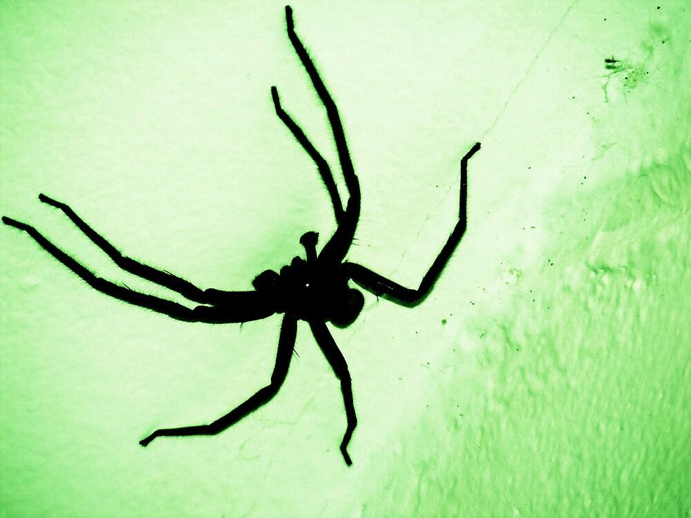 creepy spider by xXDarkAngelXx