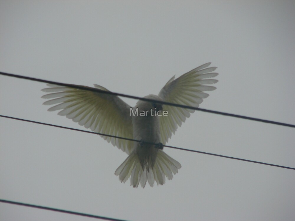 Flying White Corella by Martice