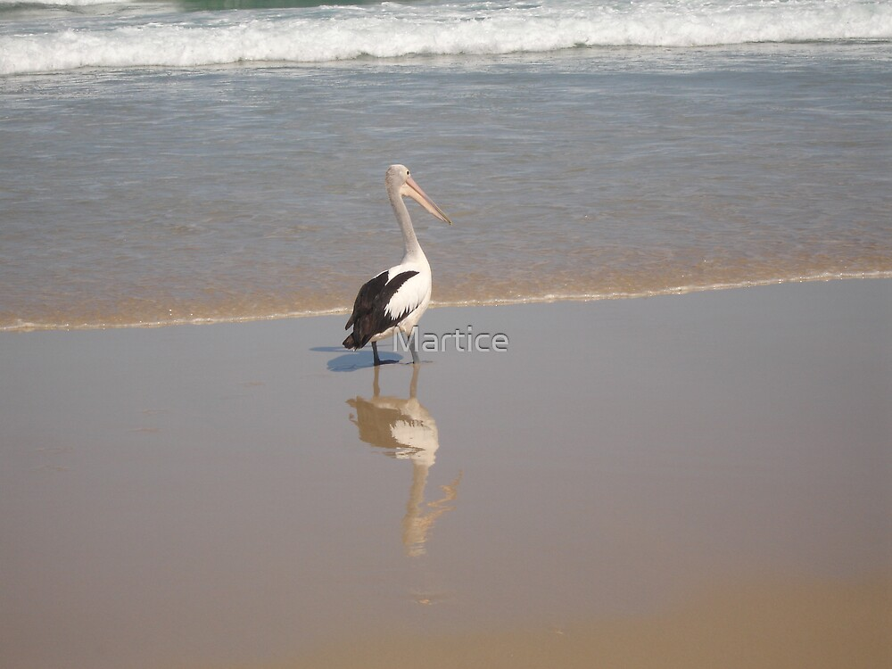 Pelican on Beach by Martice