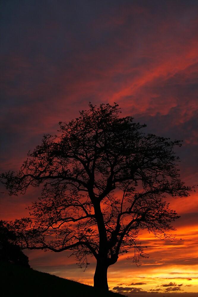 Sydney Sunset by Dev Wijewardane