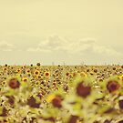 Lensbaby Sunflowers in Provence  by Nicola  Pearson