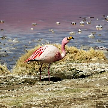 Red Lagoon Flamingo by Thecove