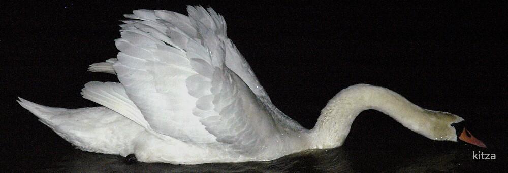 Swan 01 by kitza