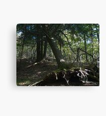 Home in the Forest Canvas Print