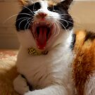 Kitty Yawn by ApeArt