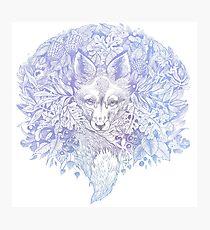 Majestic Pastel Blue Purple Hiding Fox Photographic Print