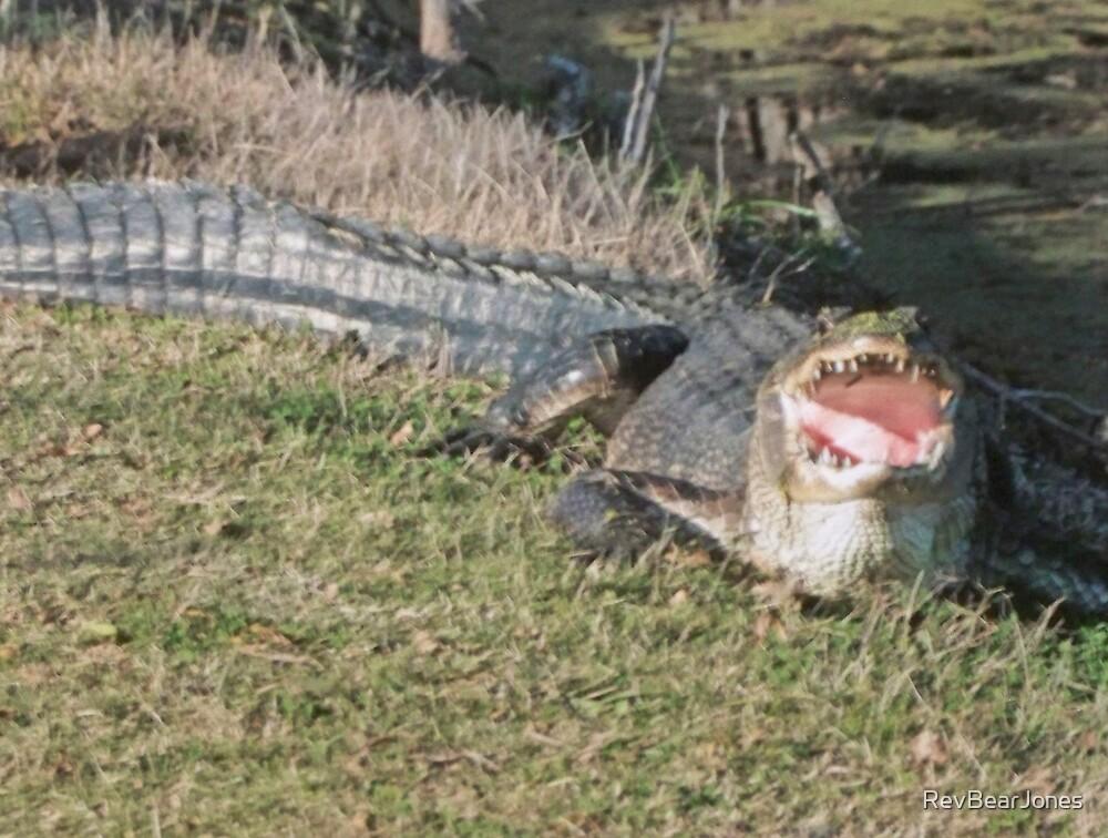 Texas Gator by RevBearJones