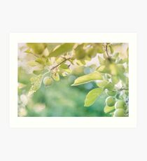 Green Apples at Golden Hour Art Print