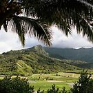 Hanalei Valley Taro Patches by Steven Newton