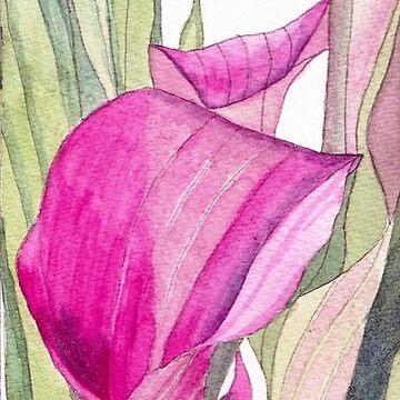 Pink Calla Lily by esvb