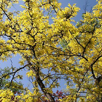 Yellow Leaves by lemontree