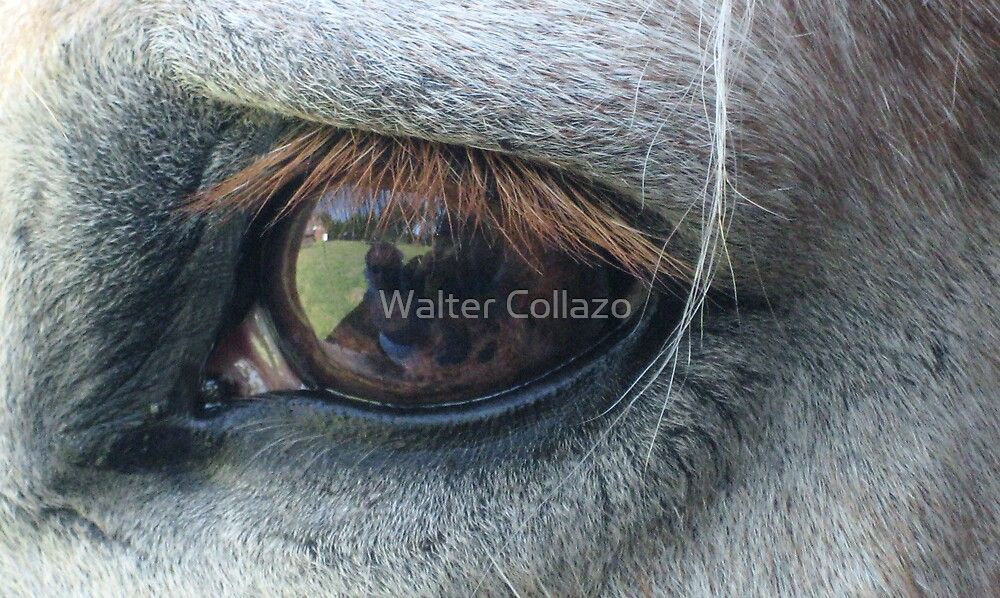 See What Roy See's by Walter Collazo