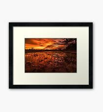 Sunset over rice paddy Framed Print