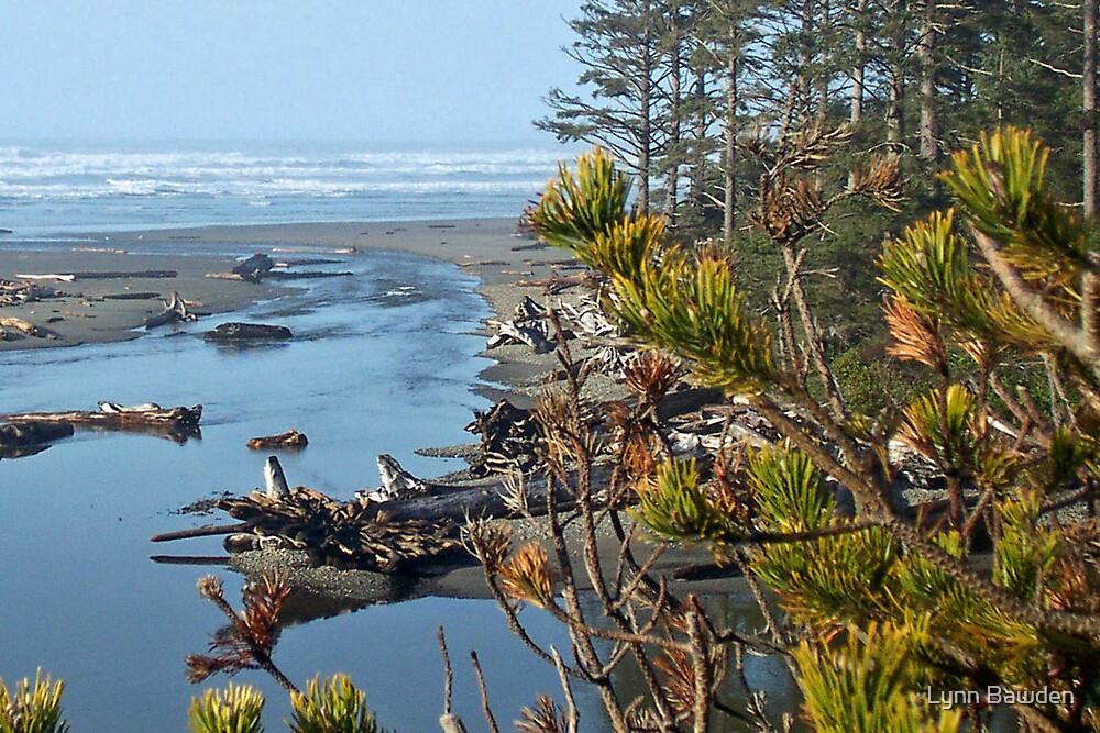 """""""Kalaloch Beach"""" by Lynn Bawden"""