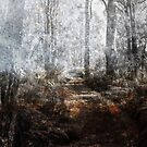 Forest Mist by Peter Evans