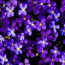 purple Haze by toby snelgrove  IPA