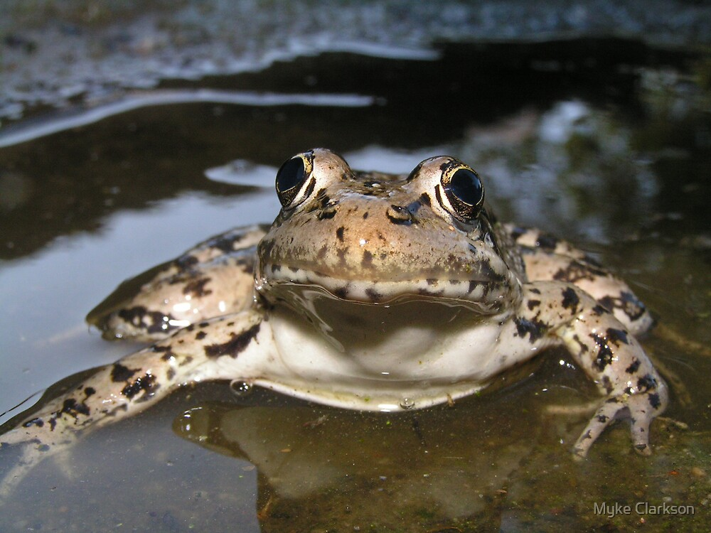 Endangered Species: California Red Legged Frog by Myke Clarkson