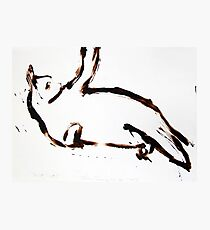 Scat, Cat! 2 Photographic Print