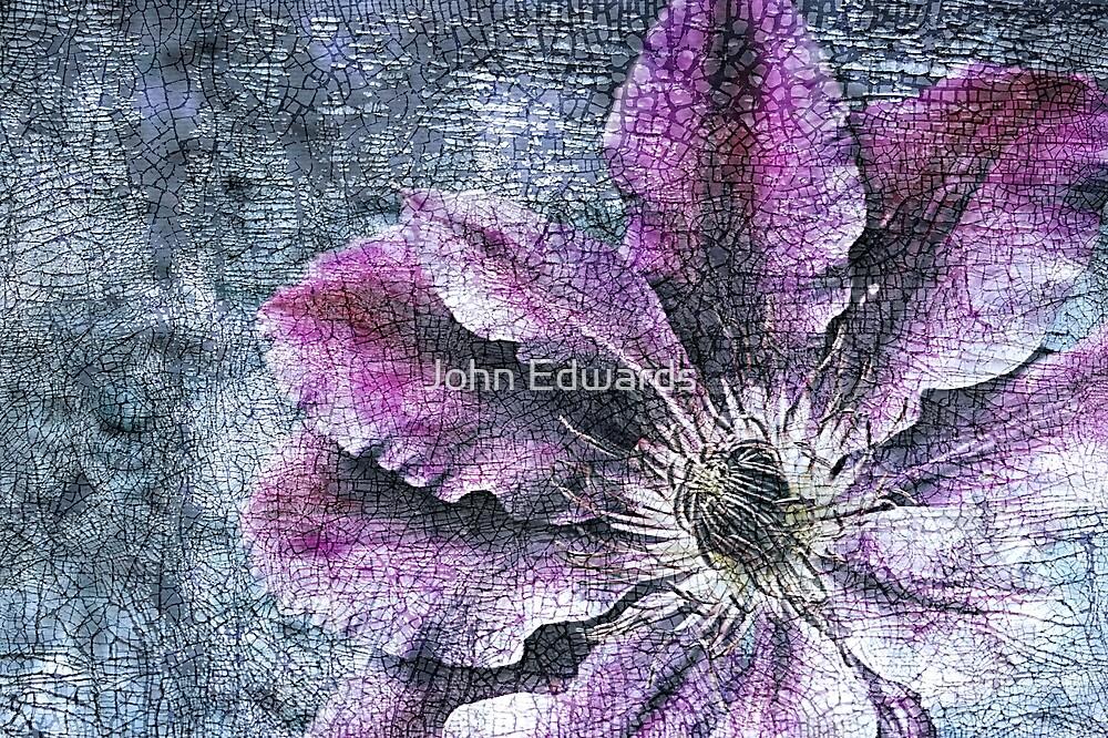 Viticella by John Edwards