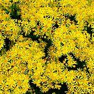 Yellow wild flowers by VanOostrum