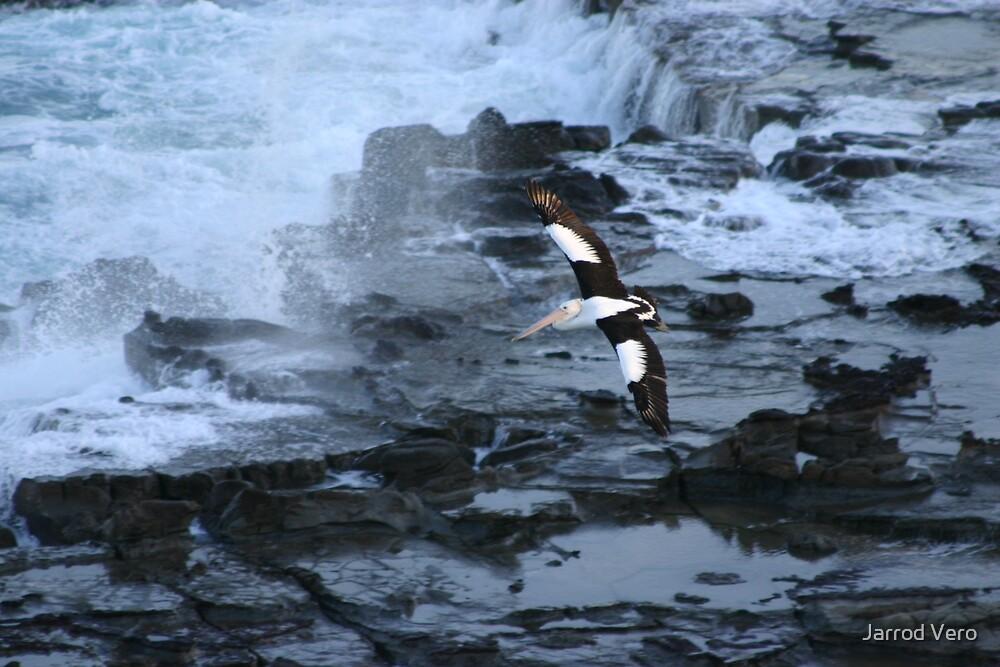 Pelican in Flight by Jarrod Vero
