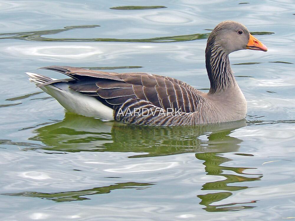 A Greylag Goose by AARDVARK