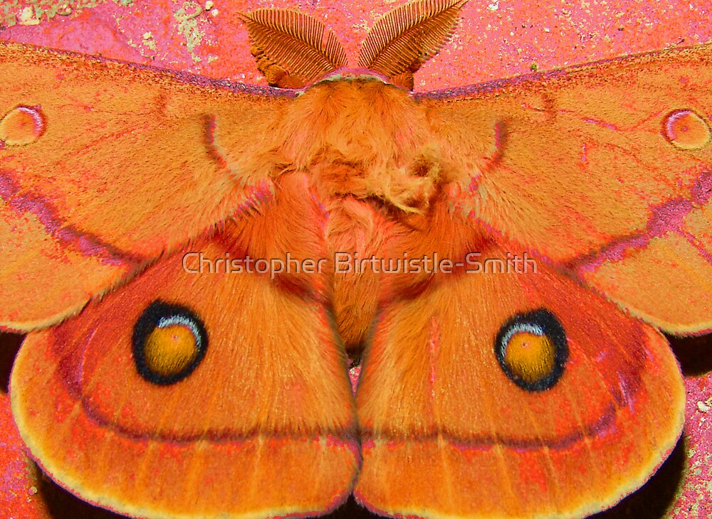 the moth outside by Christopher Birtwistle-Smith