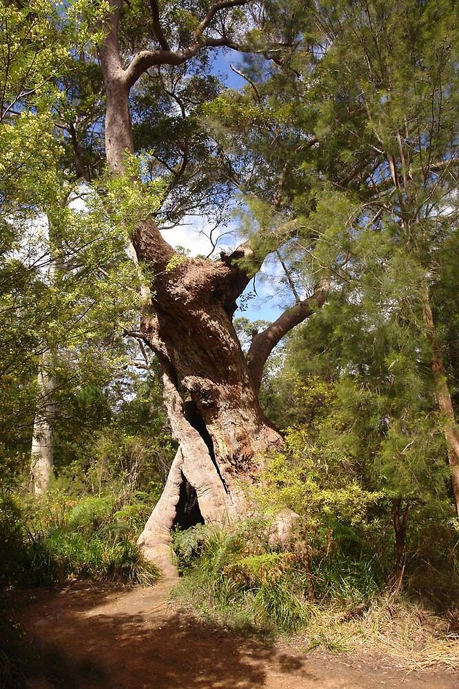 Tingle Tree by georgieboy98