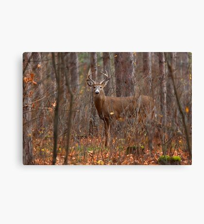 In the Stillness of the Woods - White-tailed Deer Canvas Print