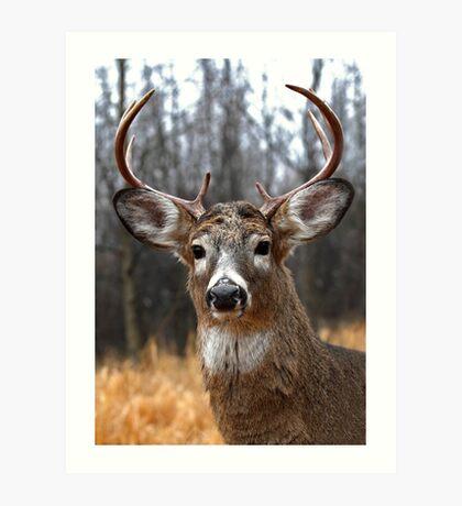 I am Prince - White-tailed deer Art Print