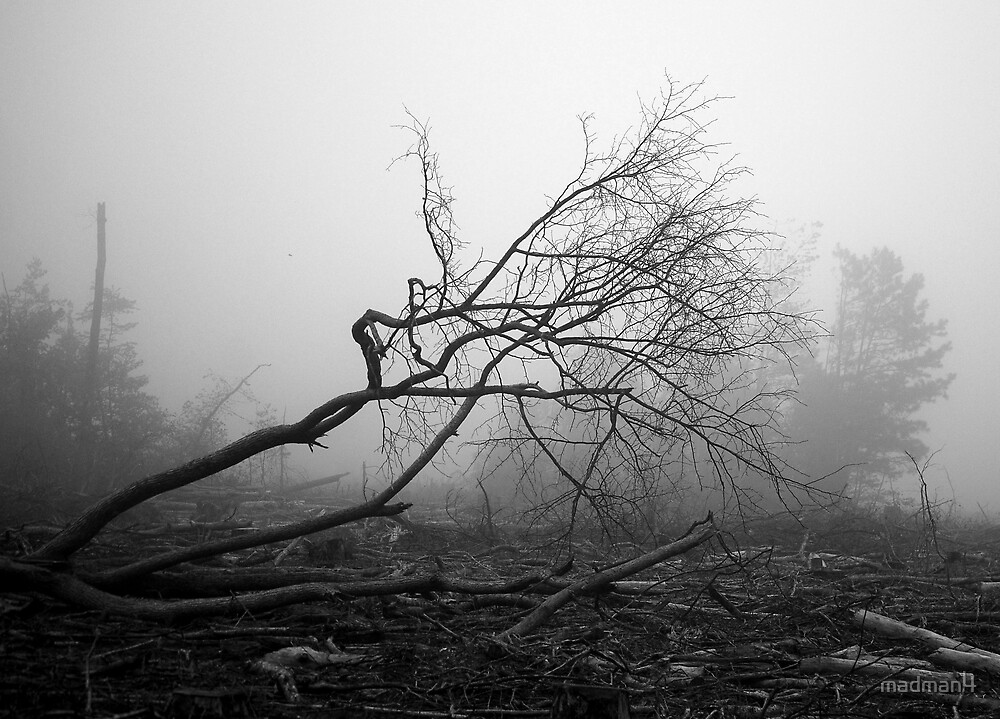 Ghost Forest by madman4