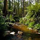 Victorian High Country_Chinaman Creek_Australia by Kay Cunningham