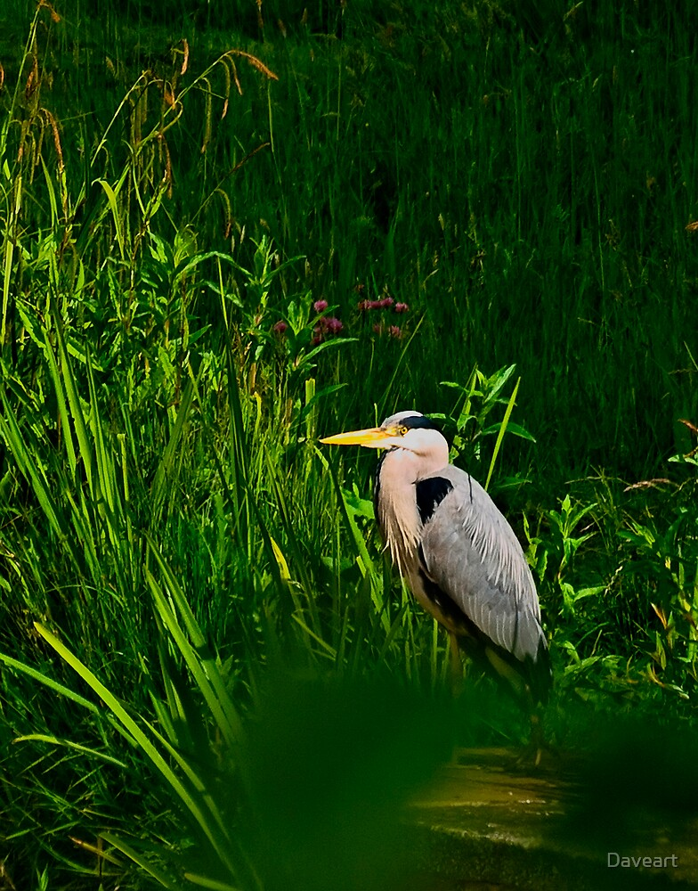 Heron through the bushes! by Daveart