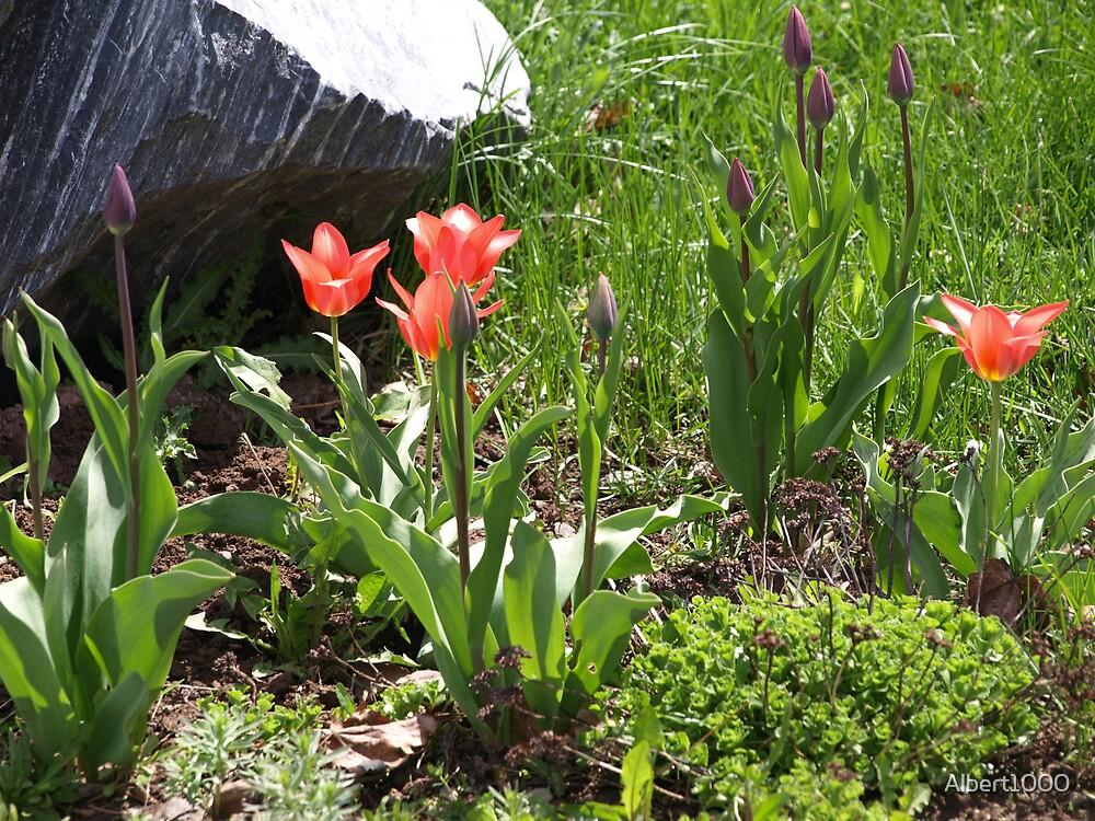 NC Spring gardens #2 by Albert1000