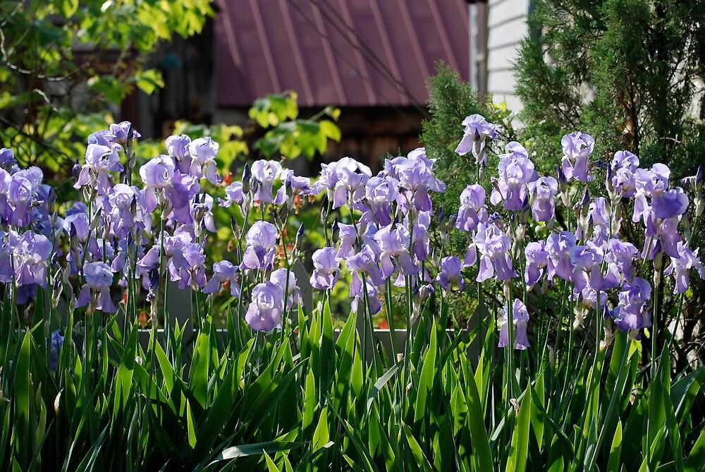 Floral Burst by Jim Caldwell