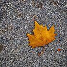 A Leaf in Madrid by Iris MacKenzie