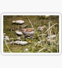 Sparrow in the undergrowth Sticker