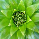 Lily Petal Buds by Melissa Contreras