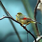 RED & YELLOW WINGS by BOLLA67