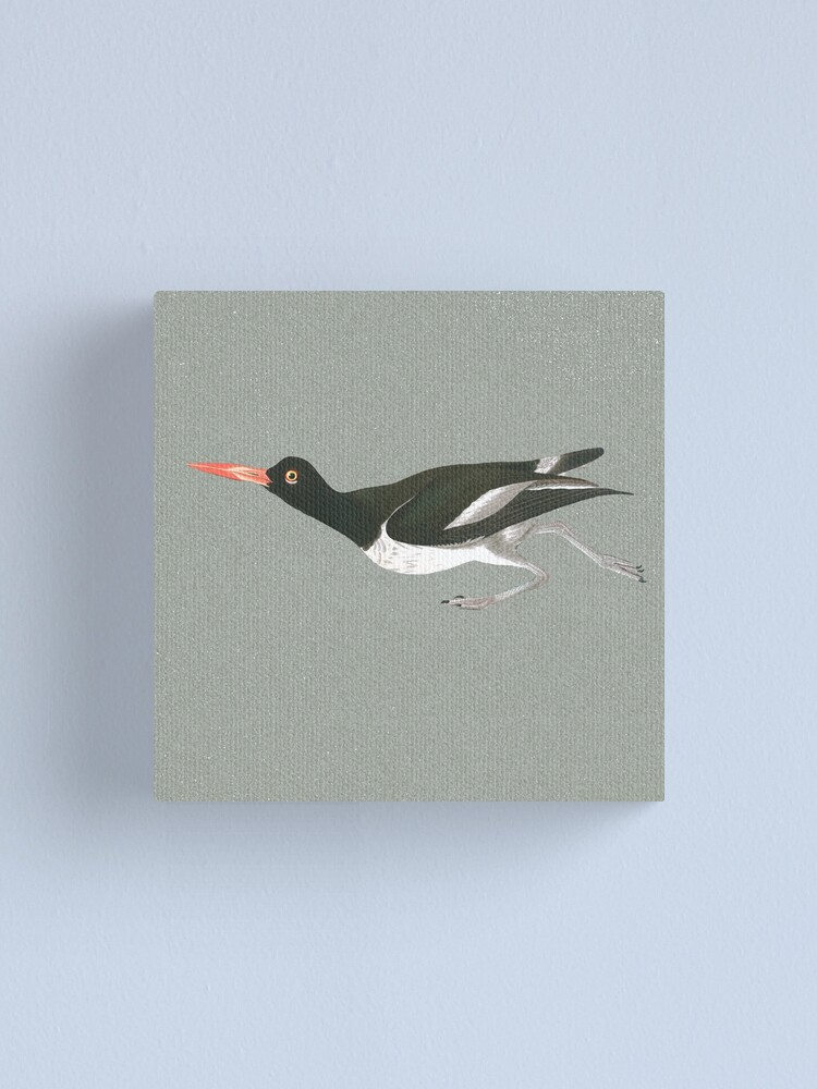 Alternate view of Oystercatcher on the run Canvas Print