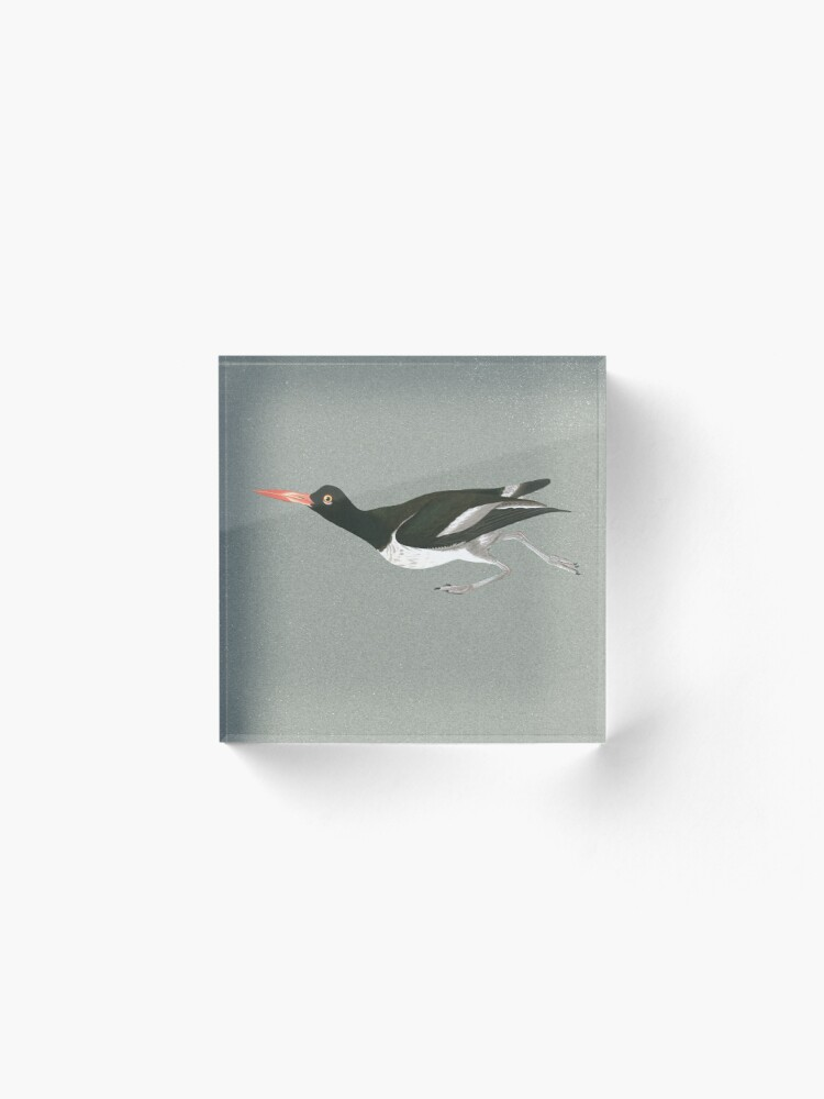 Alternate view of Oystercatcher on the run Acrylic Block
