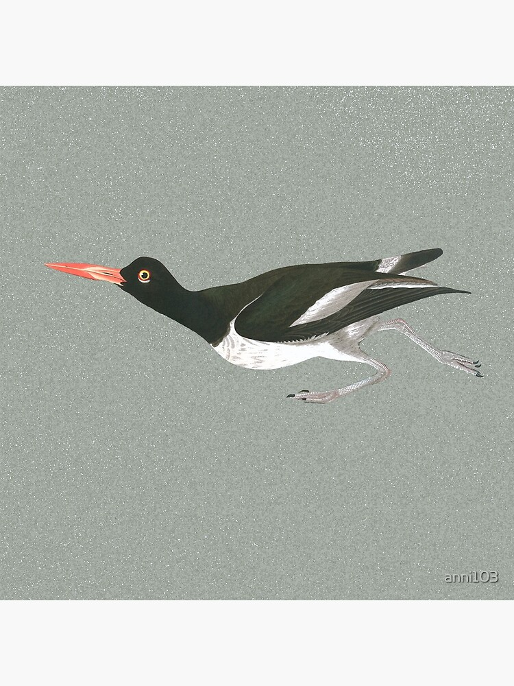 Oystercatcher on the run by anni103