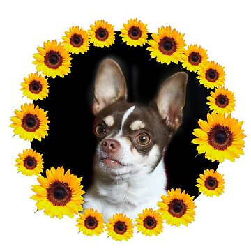 Chihuahua dog and Sunflowers by ritmoboxers